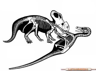 Anatom�a De Dinosaurios