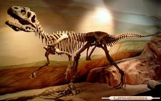 Dinosaurios De Museo