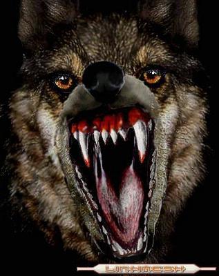 Hombres Lobos y la Literatura